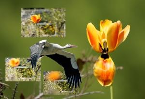 Selbst ein Storch weiß, wann er zurückkehren muss… Jeremia 8,7